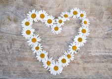Daisy heart. On wooden background Stock Image