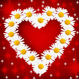 Daisy Heart stock photography