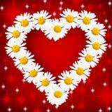 Daisy Heart Stock Photography