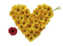 Daisy Heart Stock Foto