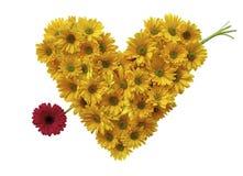 Daisy Heart. With daisy arrow on a white isolated background stock photo