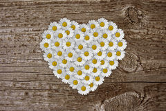 Daisy heart. Heart of dasies on old board Stock Photo
