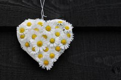 Daisy Heart on Black Royalty Free Stock Photo