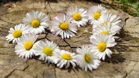 Daisy, Heart, Flowers, Flower Heart Stock Photos