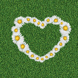 Daisy heart on grass Royalty Free Stock Images
