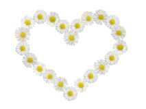 Daisy heart isolated. A heart made of daisies Stock Photo