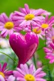Daisy with heart Stock Image