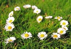 Daisy heart shape. Daisy flowers in heart shape on the grass Royalty Free Stock Photo