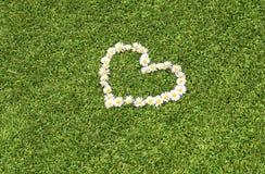Green lawn daisy heart. Daisy heart shape, and green grass Stock Photo