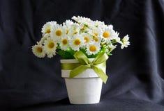 Daisy in het wit weinig pot, op zwarte achtergrond Royalty-vrije Stock Foto's