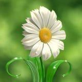 Daisy vector illustration