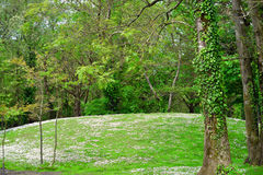 Daisy hill woods Royalty Free Stock Photography