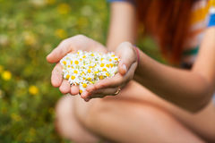 Daisy in his hand. Girl holding a daisy in his hand Royalty Free Stock Photography