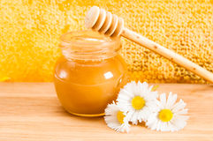 Daisy and honey Stock Images