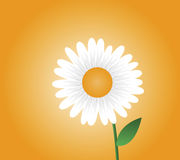 Daisy Illustration Royalty Free Stock Photo