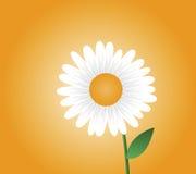 Daisy Illustration. Illustration of daisy with orange background Royalty Free Stock Photo