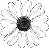 Daisy Illustration Royalty Free Stock Photos