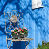 Daisy on an iron chair, blue shed Stock Images