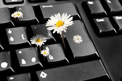 Daisy in keyboard Royalty Free Stock Photography