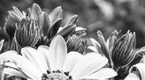 daisy kolorowa zdjęcie royalty free