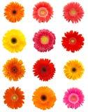 daisy kwiaty Obrazy Royalty Free