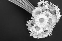daisy kwiaty Fotografia Royalty Free