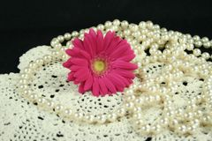 Daisy lace and pearls. Fresh daisy on lace with pearls royalty free stock image