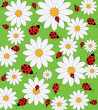 Daisy and ladybug pattern Stock Photos