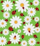 Daisy and ladybug pattern Stock Photos