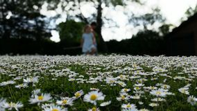 Daisy landscape out of focus Stock Photo