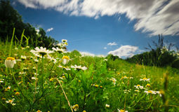 Daisy. Landscapes of one beautifull place in Croatia, Hrvatsko Zagorje, green, time, color Royalty Free Stock Photo