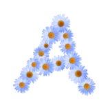 Daisy Letter blu A Immagini Stock