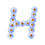 Daisy Letter blu H Fotografia Stock