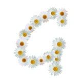Daisy Letter G Stock Image