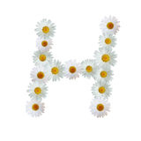 Daisy Letter H Stock Image