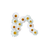 Daisy Letter N Stock Images