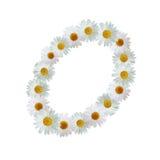 Daisy Letter O Royalty Free Stock Image