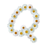 Daisy Letter Q Stock Photography