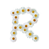 Daisy Letter R Stock Photography