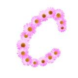 Daisy Letter rosa C Immagini Stock Libere da Diritti
