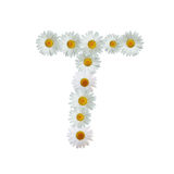 Daisy Letter T Royalty Free Stock Photography