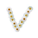 Daisy Letter V Fotografie Stock