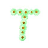 Daisy Letter verde T Fotografie Stock Libere da Diritti