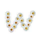 Daisy Letter W Immagini Stock
