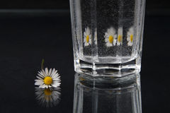 Daisy. Little daisy mirrors in glass Stock Images