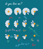 Daisy and love. Daisy flowers background with romantic text with colors Stock Photos