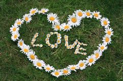 Daisy Love Heart Royalty Free Stock Photo