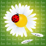 Daisy for love Stock Photo