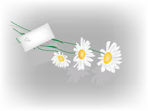 Daisy and love letter Royalty Free Stock Image