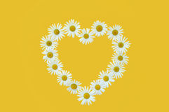 Daisy in love shape over yellow background Royalty Free Stock Photography